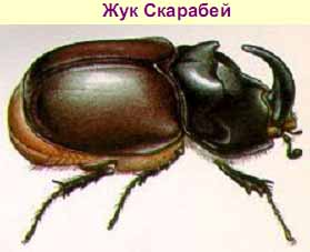 http://sbornik.ucoz.ru/_ph/1/2/579602687.jpg